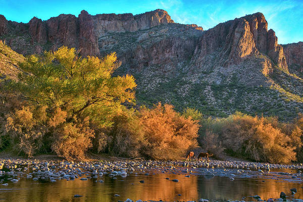 Photograph - Wild Salt River Horses And Fall Colors At Sunset by Dave Dilli