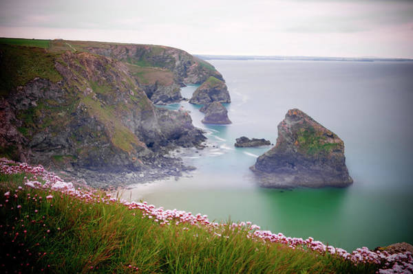 Photograph - Wild Sea Pinks In Cornwall II by Helen Northcott