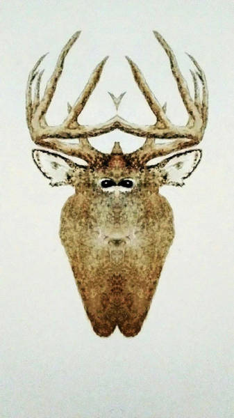 Wall Art - Painting - Wild Stag by Michael Vigliotti