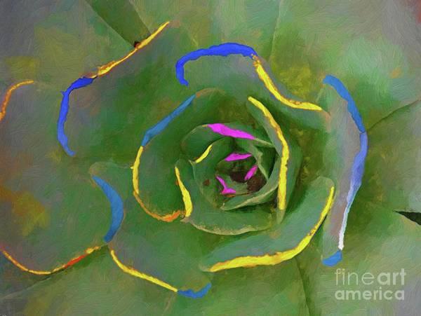 Photograph - Wild Succulent by John Kolenberg