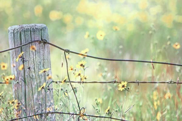 Wall Art - Photograph - Wild Sunflowers Soft Focus Montana by Jennie Marie Schell