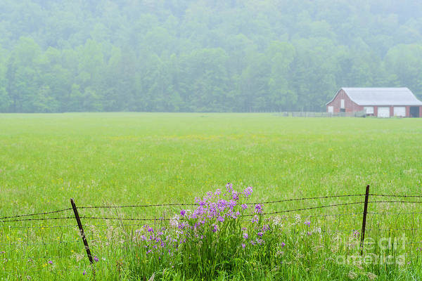 Lavender Mist Wall Art - Photograph - Wild Sweet William In The Rain by Thomas R Fletcher
