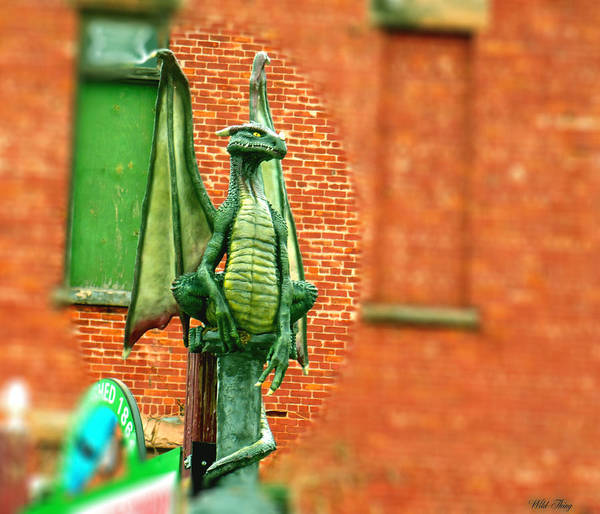 Photograph - Wild Things Irish Dragon by Wild Thing