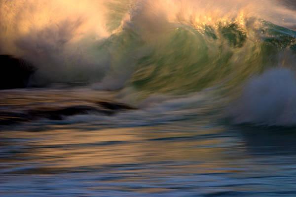 Photograph - Wild Triton by Brad Scott