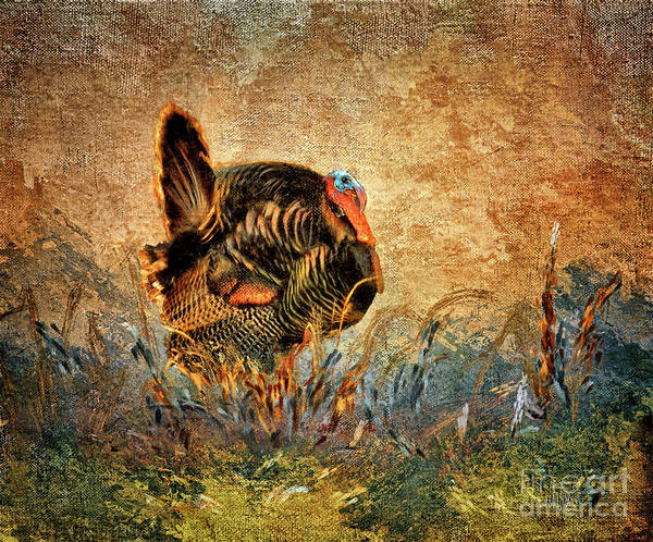 Turkey Digital Art - Wild Turkey by Lois Bryan