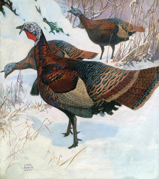 Painting - Wild Turkey by Lynn Bogue Hunt
