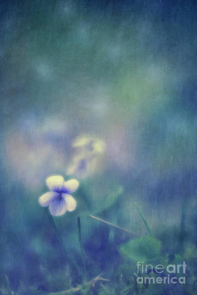 Wall Art - Photograph - Wild Violets by Priska Wettstein