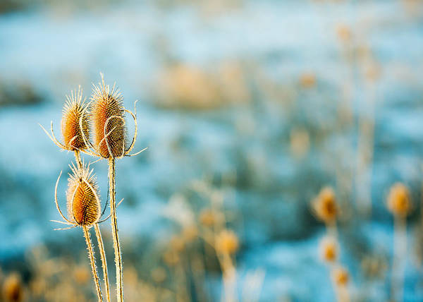Photograph - Wild Weed by Todd Klassy