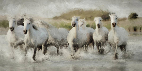 Photograph - Wild White Horses Of The Camargue I by Karen Lynch