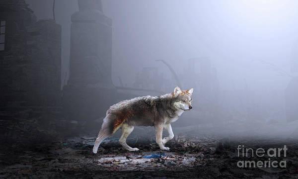 Photograph - Wild Wolf by Sajid Ch