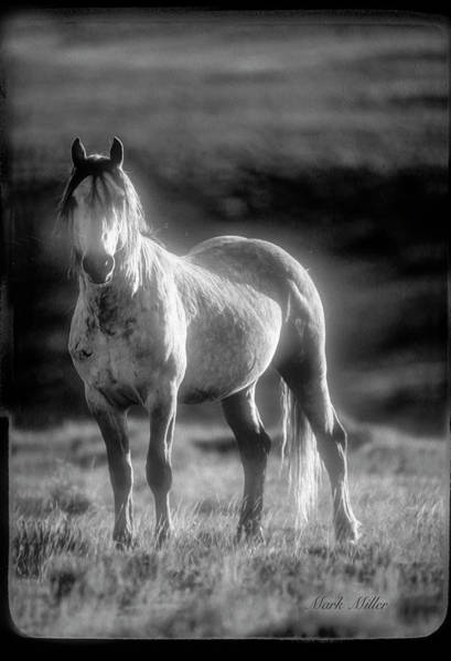 Photograph - Wild Wyoming Horse Encounter by Mark Miller