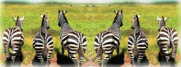 Photograph - Wild Zebras-pano by Ericamaxine Price