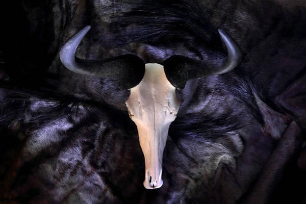 Photograph - Wildebeest by David Andersen