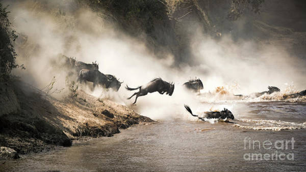 Wall Art - Photograph - Wildebeest Leap Of Faith Into The Mara River by Jane Rix