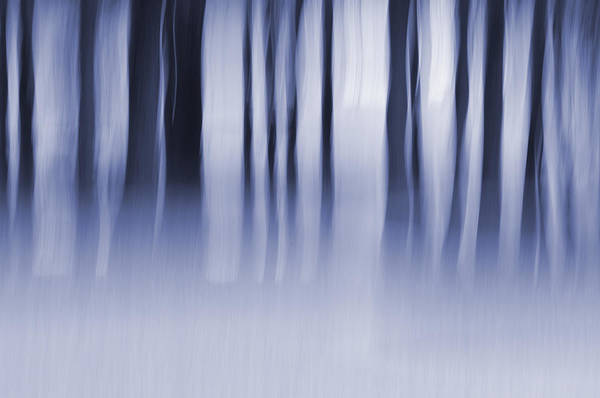Photograph - Wildermist Evening by Jeff Mize