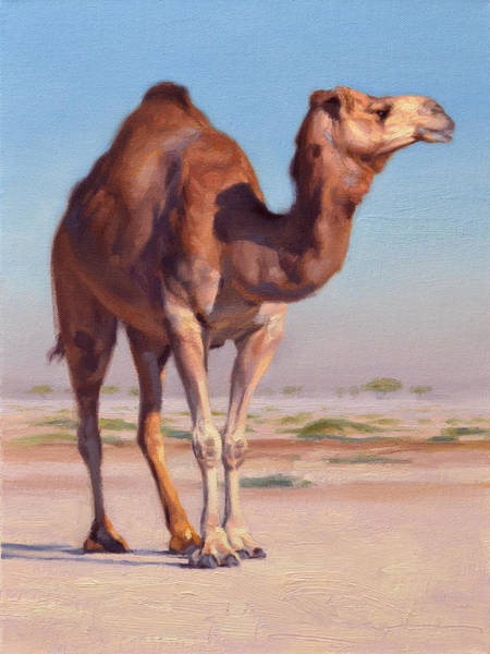 Camel Painting - Wilderness Camel by Ben Hubbard