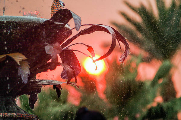 Photograph - Wildfire And Fountain Of Life by Scott Campbell