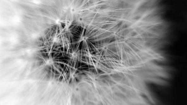 Digital Art - Wildflower 7 Black N White by Belinda Cox