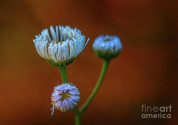 Photograph - Wildflower Blossom Trio by Tom Claud