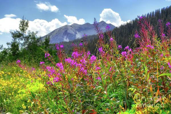 Photograph - Wildflower Capital by Susan Warren