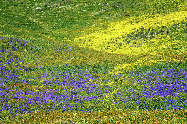 Photograph - Wildflower Carpet Detail by Lynn Bauer