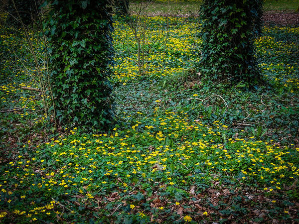 Photograph - Wildflower Carpet In Yeats' Seven Woods by James Truett