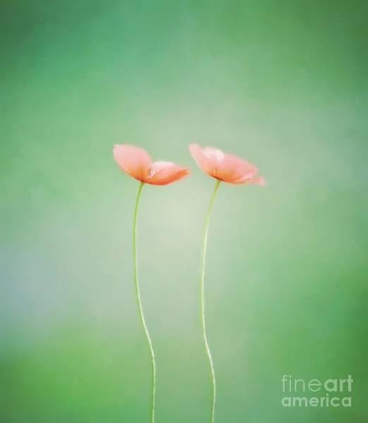 Wildflower Duet Art Print