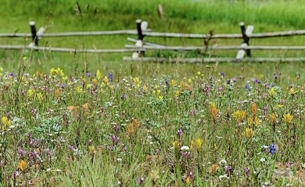 Photograph - Wildflower Fence by Gaelyn Olmsted