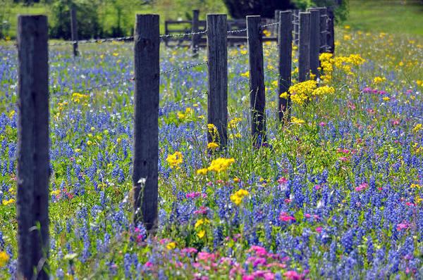 Blanton Wall Art - Photograph - Wildflower Fenceline by Teresa Blanton
