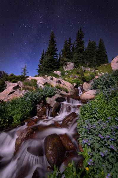 Indian Peaks Wilderness Photograph - Wildflower Finale In The Indian Peaks by Mike Berenson