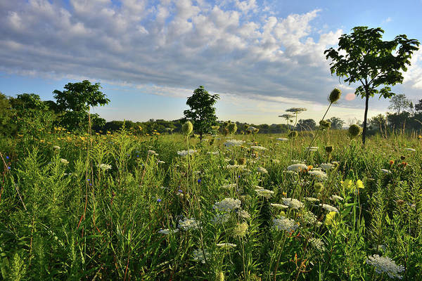 Photograph - Wildflower Garden In Lakewood Forest Preserve by Ray Mathis