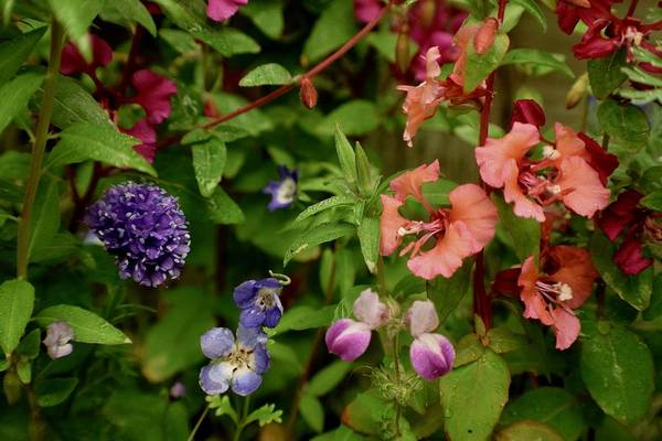 Photograph - Wildflower Garden In The Morning by Lynda Anne Williams