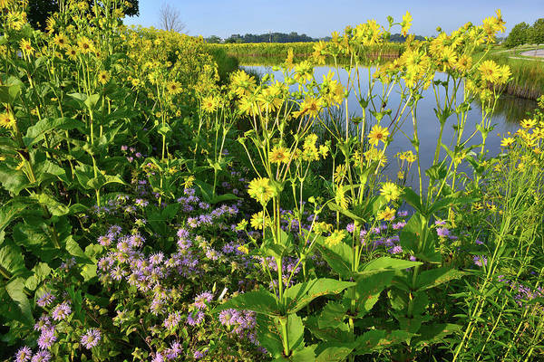 Photograph - Wildflower Garden On The Lakeshore by Ray Mathis