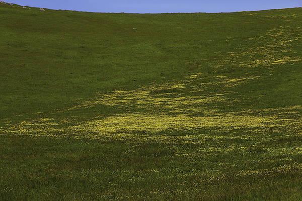 Hillside Photograph - Wildflower Hillside by Garry Gay