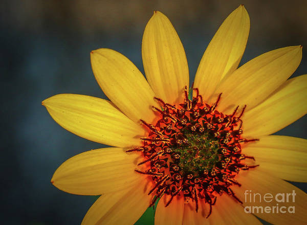 Photograph - Wildflower In Sunlight by Tom Claud