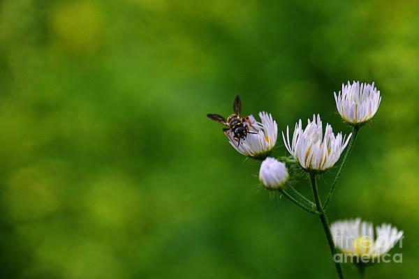 Photograph - Wildflower Landing  by Christina VanGinkel
