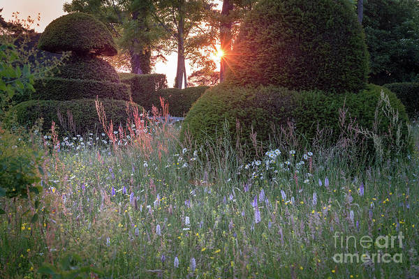 Wildflower Meadow At Sunset, Great Dixter Art Print