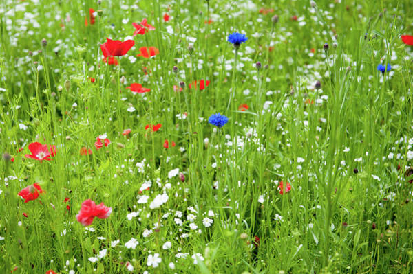 Photograph - Wildflower Meadow by Helen Northcott