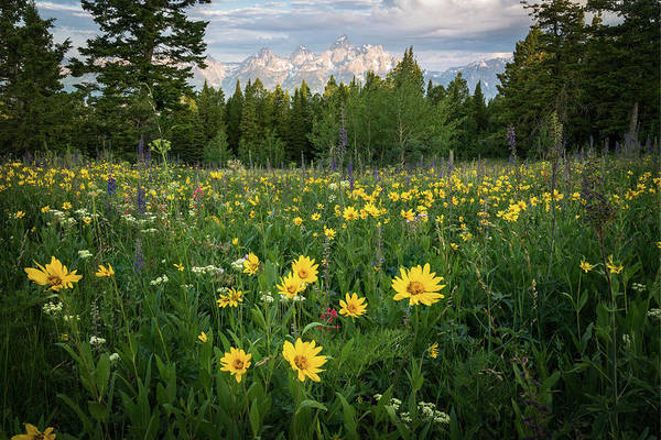 Photograph - Wildflower Meadow In The Tetons by James Udall