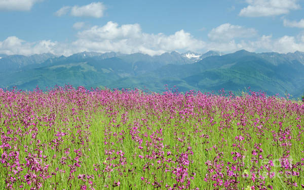 Wildflower Meadows And The Carpathian Mountains, Romania Art Print