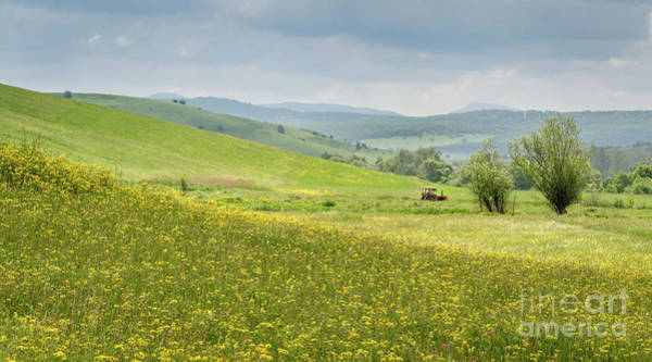 Photograph - Wildflower Meadows, Transylvania by Perry Rodriguez