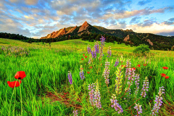 Colorado Springs Photograph - Wildflower Mix by Scott Mahon