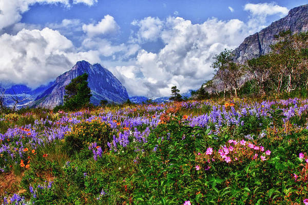 Photograph - Wildflower Profusion by Albert Seger