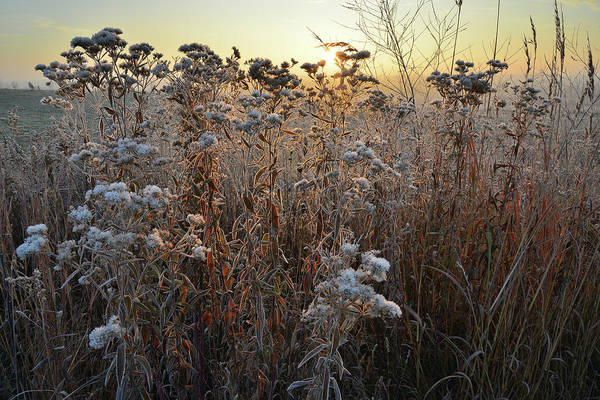 Photograph - Wildflower Shadows At Sunrise In Glacial Park by Ray Mathis