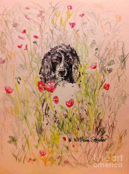 Grass Field Drawing - Wildflower Spaniel by N Willson-Strader