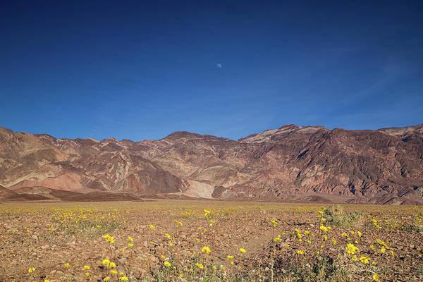 Death Valley Np Photograph - Wildflower Superbloom by Kunal Mehra