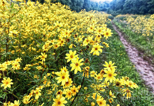 Wall Art - Photograph - Wildflower Trail by George Oze