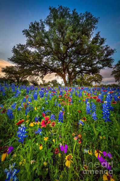 Texas Bluebonnet Photograph - Wildflower Tree by Inge Johnsson