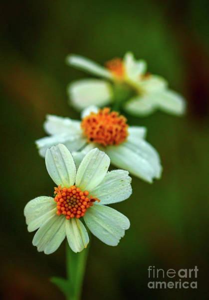 Photograph - Wildflower Trio by Tom Claud
