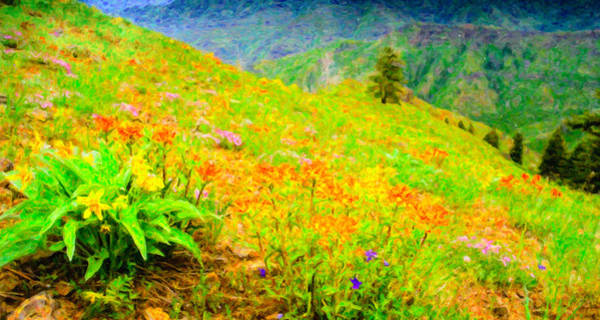 Desert Paintbrush Photograph - Wildflowers Above Imnaha Canyon by Adele Buttolph